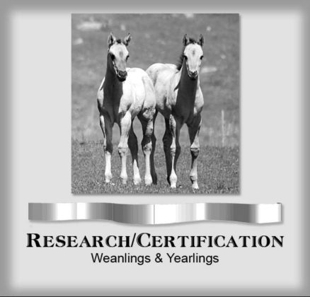 Research weanlings & yearlings copy