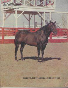 foundation quarter horse